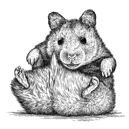 engrave isolated hamster illustration sketch. linear art