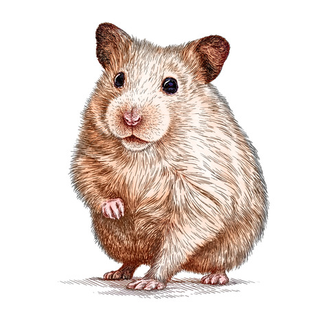 mouse animal: engrave isolated hamster illustration sketch. linear art
