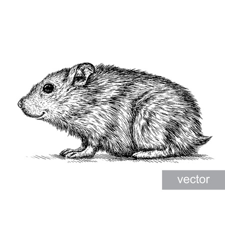 engrave isolated vector hamster illustration sketch. linear art 일러스트