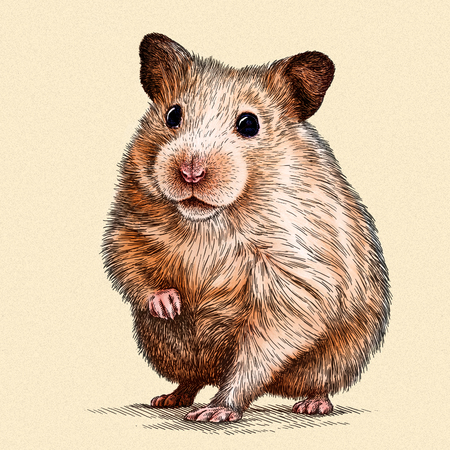 hairy arms: engrave isolated hamster illustration sketch. linear art
