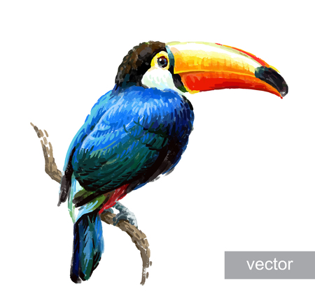 Toucan sitting on tree branch isolated on white background. Tropical birds. Drawn vector illustration. Çizim