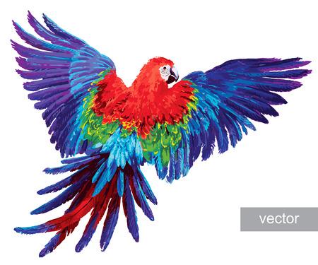 oiseau dessin: Perroquets colorés. Belle ara bleu et or. Vecteur Illustration