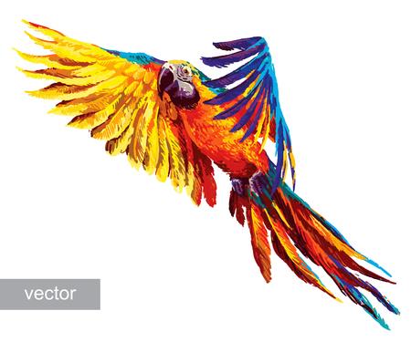 papagayo: Loros de colores. Hermoso guacamayo azul y oro. Vector Vectores