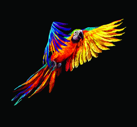 birds of paradise: Colorful parrots. Beautiful blue and gold macaw Stock Photo