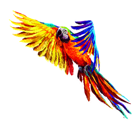 exotic flowers: Colorful parrots. Beautiful blue and gold macaw Stock Photo