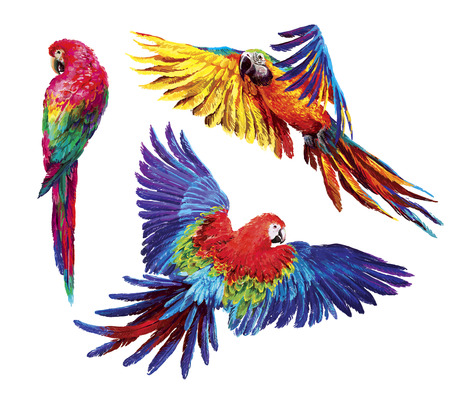 Colorful parrots. Beautiful blue and gold macaw 写真素材