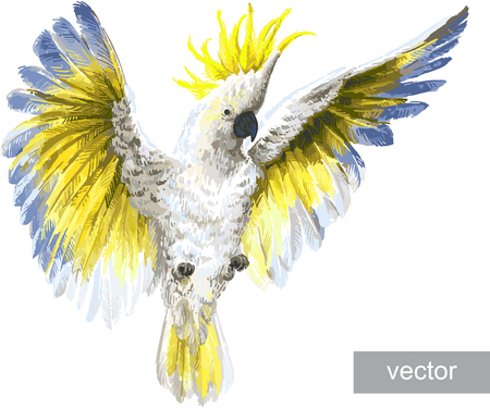 cockatoo: Tropical birds, parrots. Crested Cockatoo, isolated on white