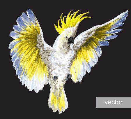 Tropische vogels, papegaaien. KuifKaketoe, geïsoleerd op zwart Vector Illustratie