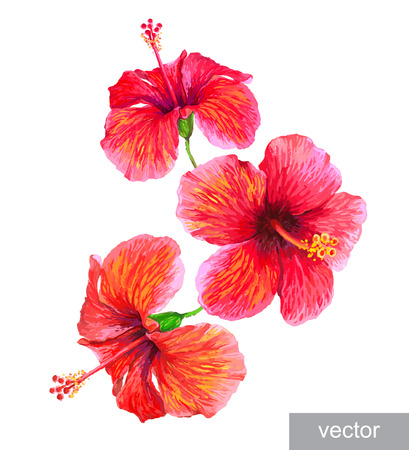Tropical plants isolated on white. Hibiscus flower. Vector illustration.