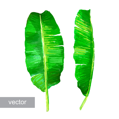 Palm feuilles de bananier isolé sur blanc. Ensemble de feuilles tropicales. Vector illustration.