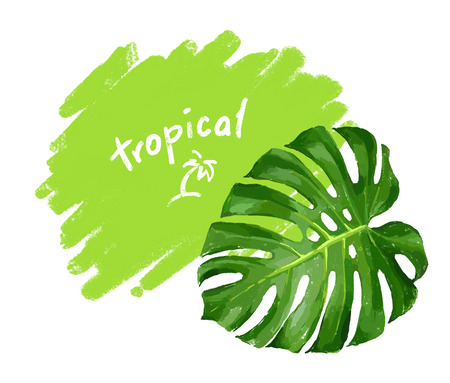 monstera: Tropical monstera leaf color isolated realistic illustration