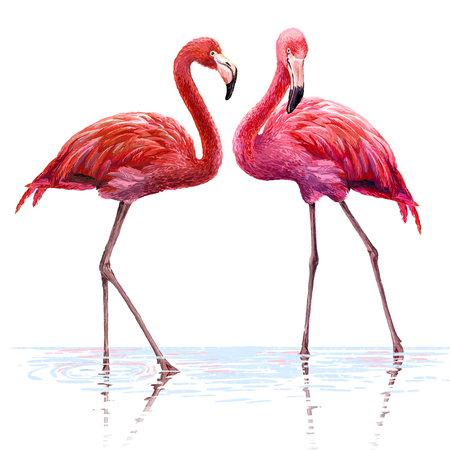 Colorful pink flamingo. Realistic illustration. Blue Lagoon