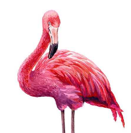 Colorful pink flamingo. Realistic illustration. Blue Lagoon