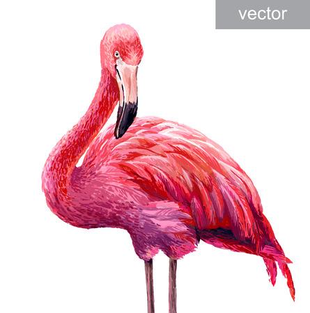 blue lagoon: Colorful pink vector flamingo. Realistic illustration. Blue Lagoon