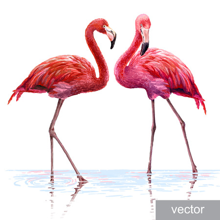 lagoon: Colorful pink vector flamingo. Realistic illustration. Blue Lagoon