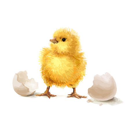 chik: Easter realistic cute yellow little chicken illustration