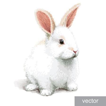 Pascua pequeña ilustración conejo blanco lindo realista. Vector.