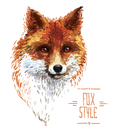 Colored red fox illustration on white background