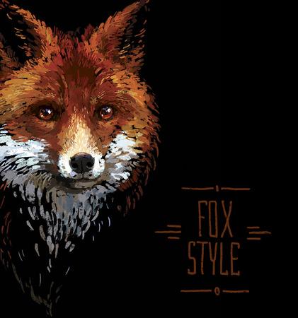 vertebrate: Colored red fox illustration on white background