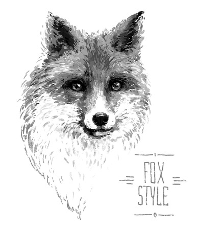 bushy: Colored red fox illustration on white background