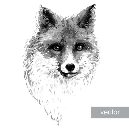 zorro: Ilustración zorro rojo de colores sobre fondo blanco. Vector.