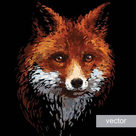 fox: Colored red fox illustration on white background. Vector.