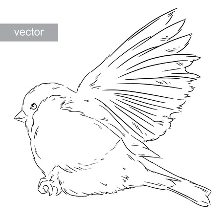 bullfinch: Bullfinch bird winter nature wildlife illustration contour