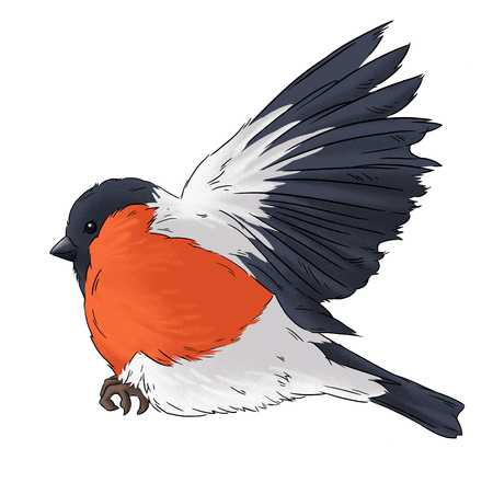 wildlife: Bullfinch bird winter nature wildlife illustration contour