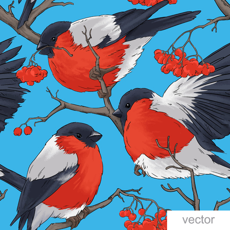 wildlife: Bullfinch bird vector winter nature wildlife illustration contour  seamless pattern