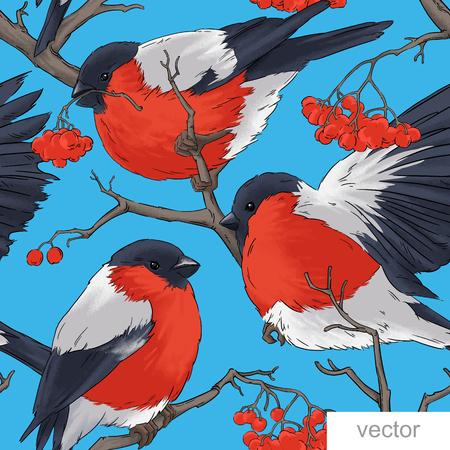 bullfinch: Bullfinch bird vector winter nature wildlife illustration contour  seamless pattern