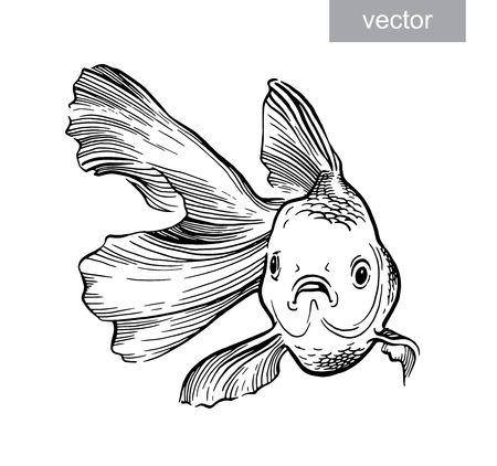 aquaculture: Goldfish illustration artwork  line underwater engraving vector
