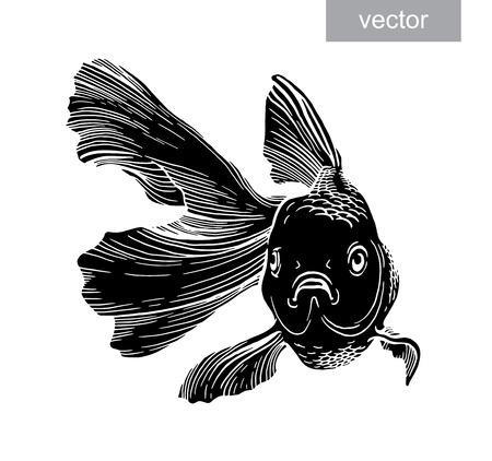 fishery: Goldfish illustration artwork  line underwater engraving vector
