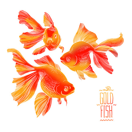 pez dorado: Peces de colores ilustración ilustraciones línea de la meditación Zen bajo el agua