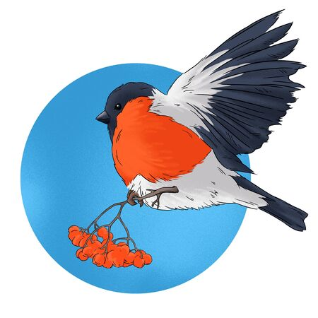 wildlife: Bullfinch bird winter nature wildlife illustration contour  seamless pattern