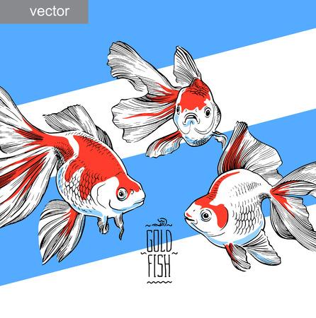 aquaculture: Goldfish illustration artwork  line underwater color wildlife  vector