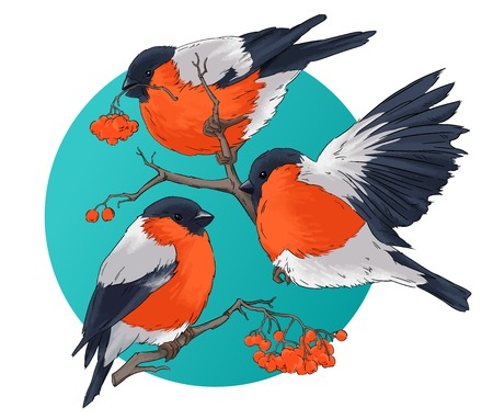 bullfinch: Bullfinch bird winter nature wildlife illustration contour  seamless pattern vector