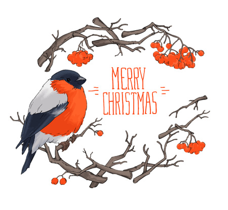 wildlife: Bullfinch bird winter nature wildlife illustration contour  seamless pattern vector