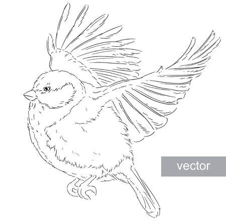 parus: Blue Tit on a branch Parus caeruleus vector Illustration