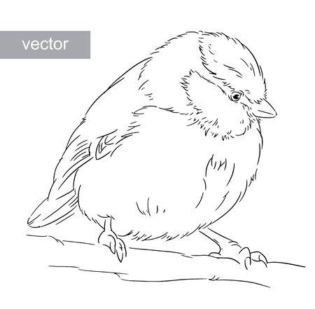 waver: Blue Tit on a branch Parus caeruleus vector Illustration