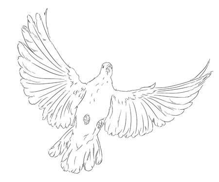 holy leaves: The dove of peace the white bird