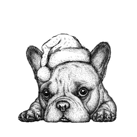 Französisch Bulldogge, schwarz und weiß gravieren. Weihnachtsmütze. Standard-Bild - 68866268