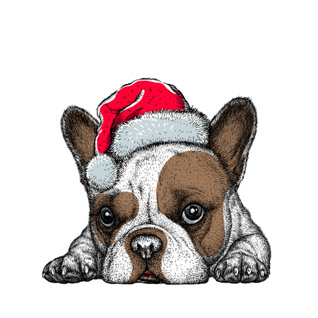 French bulldog, black and white engrave. Christmas hat.