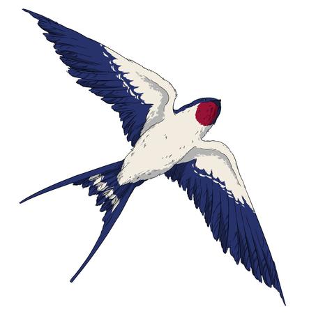 oiseau dessin: voler hirondelle oiseau dans le ciel ailes réalistes Banque d'images
