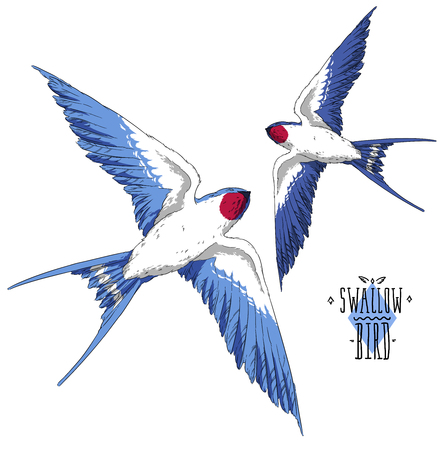 fly swallow bird in the sky realistic wings Stock Photo