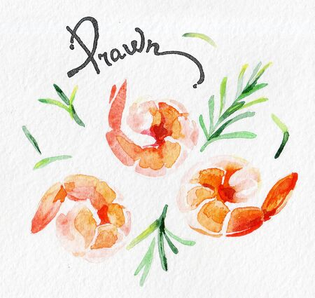 Shrimp, prawn. Seafood, rosemary, greens, parsley. Watercolor hand drawing. Food, vegetables and fruit isolated on white background. Book illustration, recipe, menu, magazine or journal article. Banco de Imagens