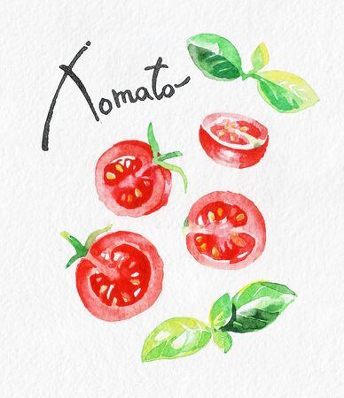 Tomato and Basil. Watercolor hand drawing. Food, vegetables and fruit isolated on white background. Book illustration, recipe, menu, magazine or journal article.