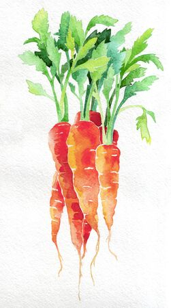 Carrot. Watercolor hand drawing. Food, vegetables and fruit isolated on white background. Book illustration, recipe, menu, magazine or journal article.