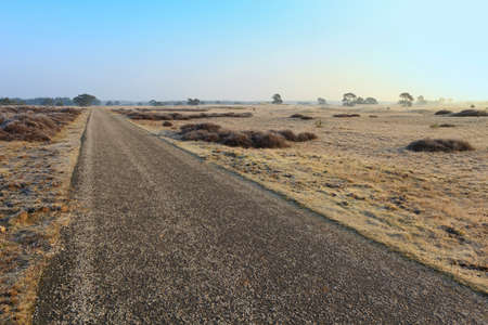 veluwe: Empty Road Through Veluwe Heath Land In Winter. Stock Photo