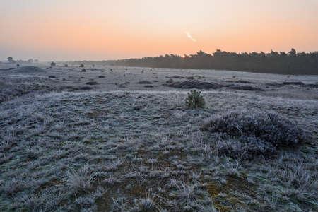 veluwe: Winter sunrise at national park Veluwe in The Netherlands Stock Photo