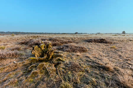 moorland: Moorland Frozen In Winter